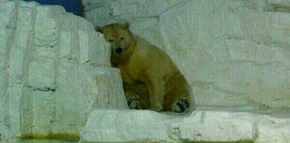 Proyecto de ley para salvar al 'animal más triste del mundo'
