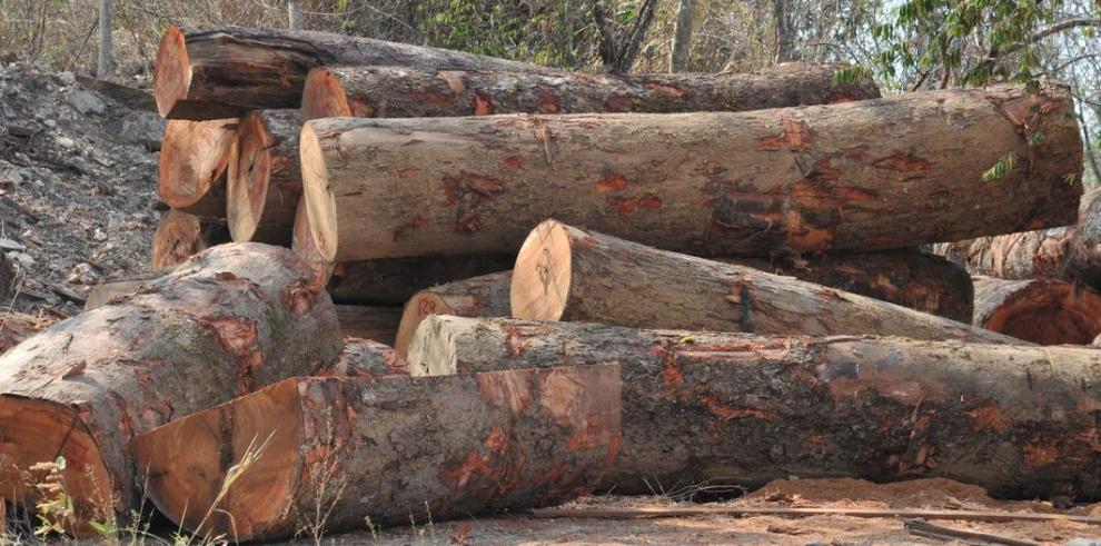 Negocian $525 en productos forestales de Panamá