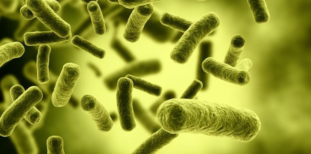 La natural interacción entre los virus y el humano