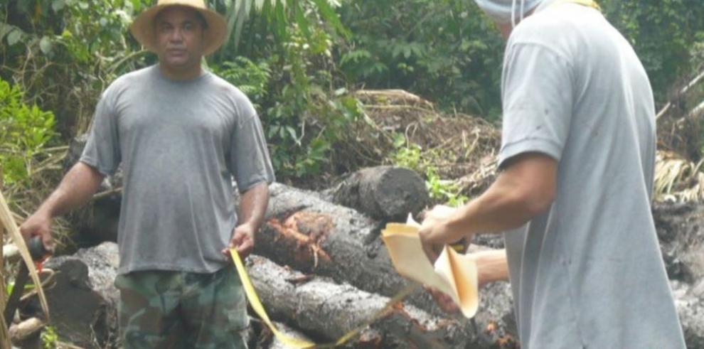 Detectan tala ilegal en el distrito de Chepo