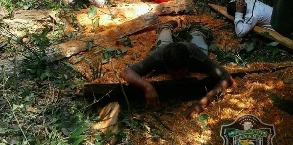 Policía Ecológica atiende 7 casos de tala ilegal de árboles