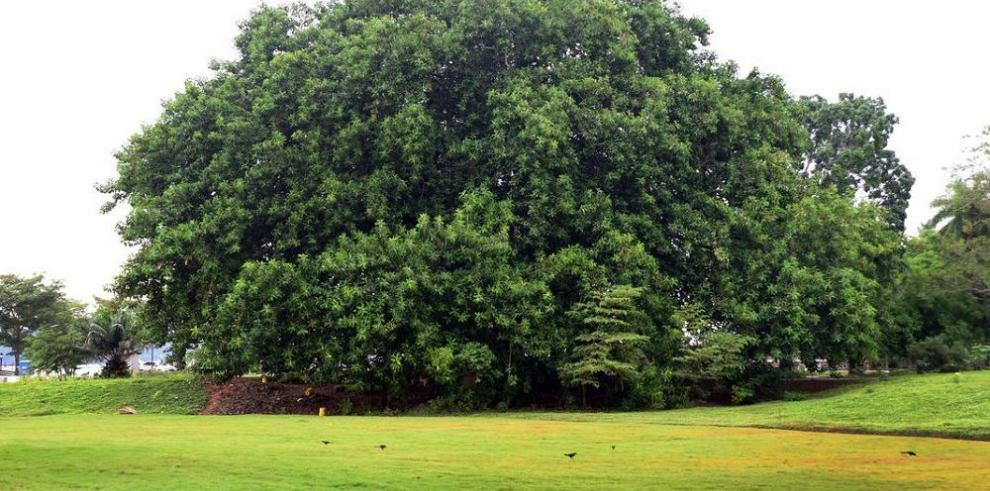 Un parque que narra la historia de la flora del istmo