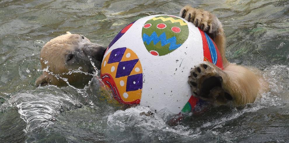 Las imágenes más tiernas de los consentidos del Zoológico