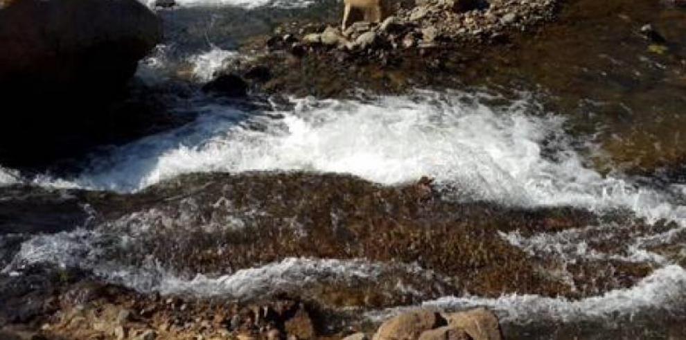 MINSA asegura que agua del Río Iguala en Tolé es totalmente segura