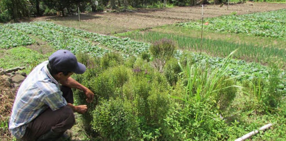 Rentabilidad vs. supervivencia, la disyuntiva del agricultor