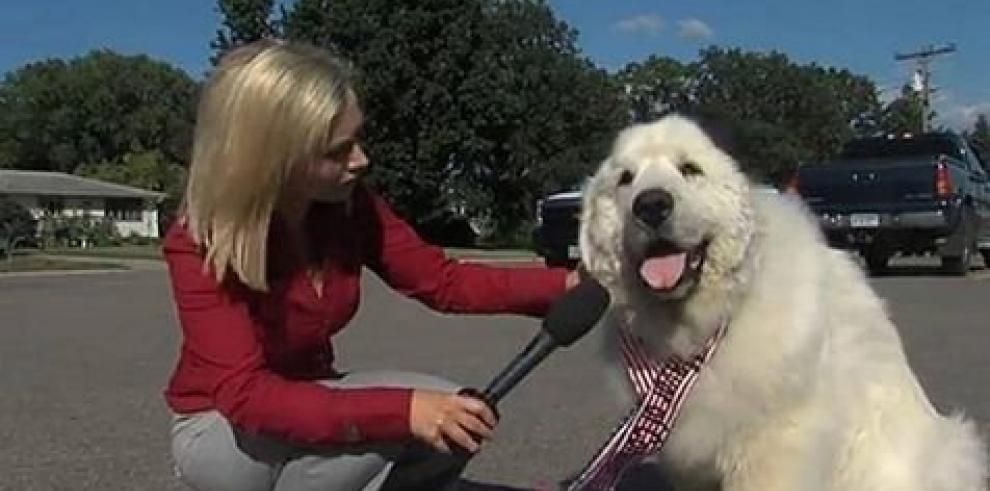Eligen a un perro como alcalde en Estados Unidos