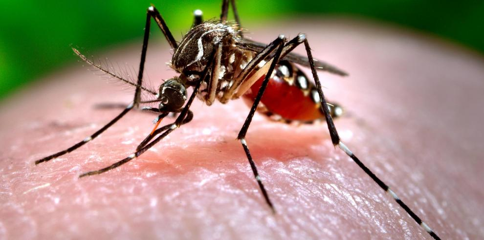 Viruschikungunya se expande en Latinoamérica