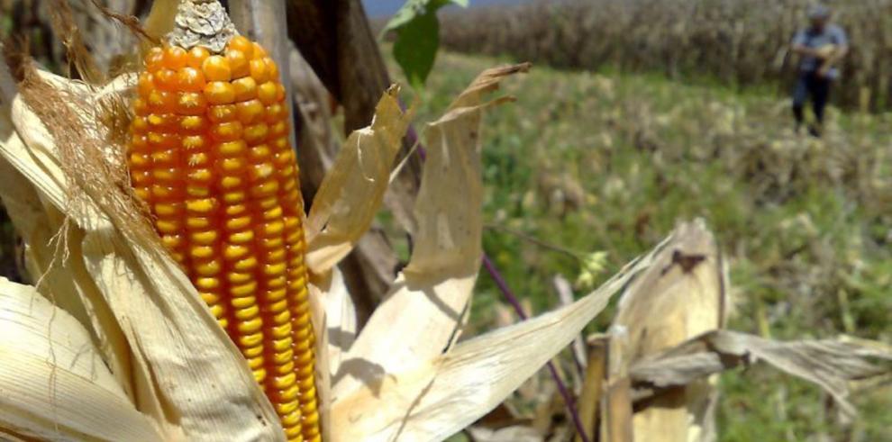 Advierten déficit en producción nacional de granos