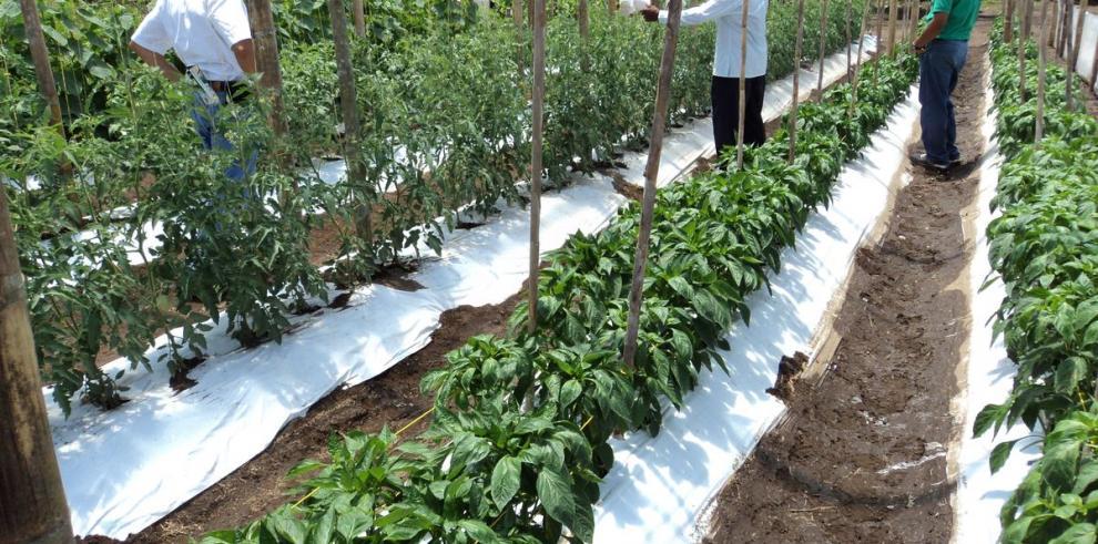 El IICA consolida 38 innovaciones agrícolas en Centroamérica