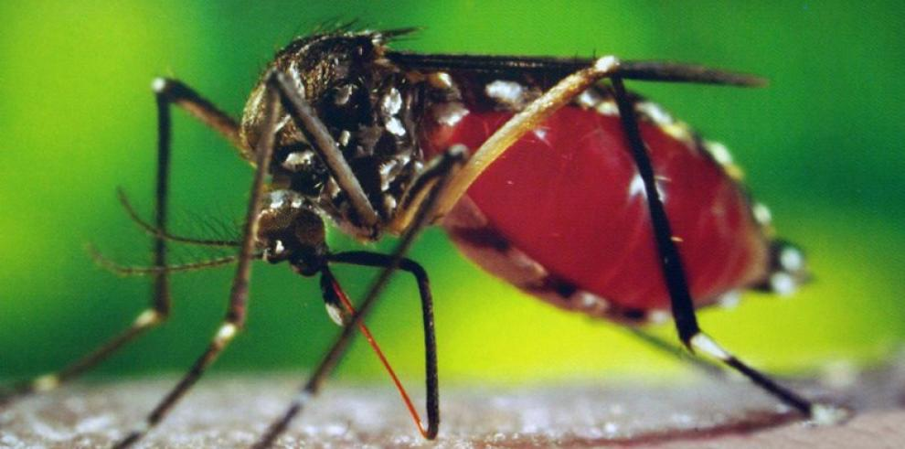 Recomiendan a panameños no viajar al Caribe por virus Chikungunya