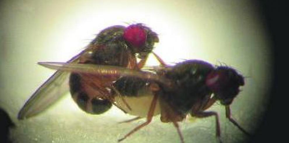Sobrevive al desierto comiendo moscas