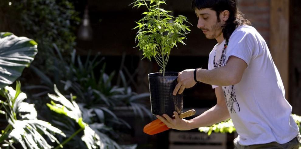Médicos receratán cannabis