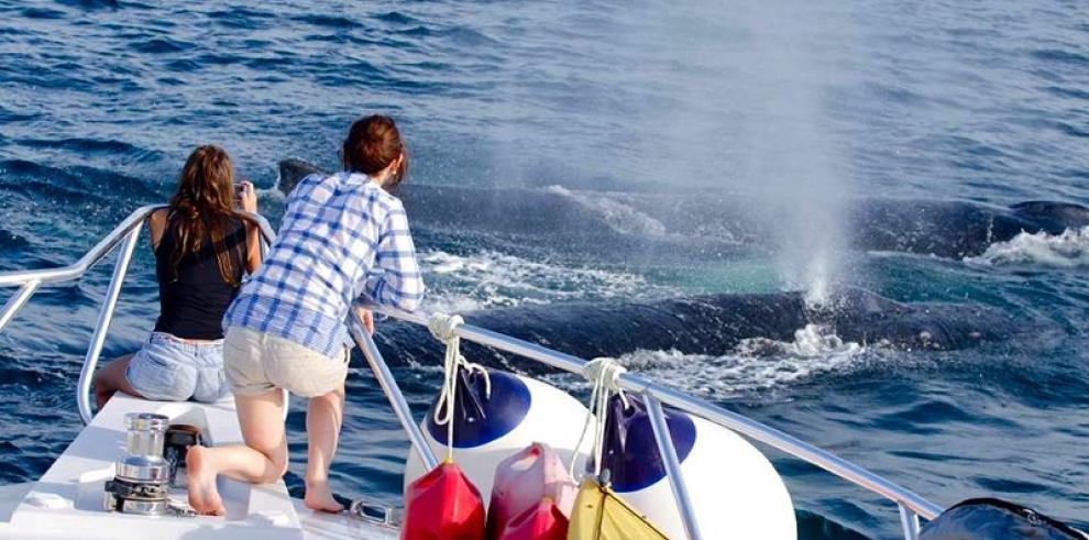 Panamá, destino de ballenas