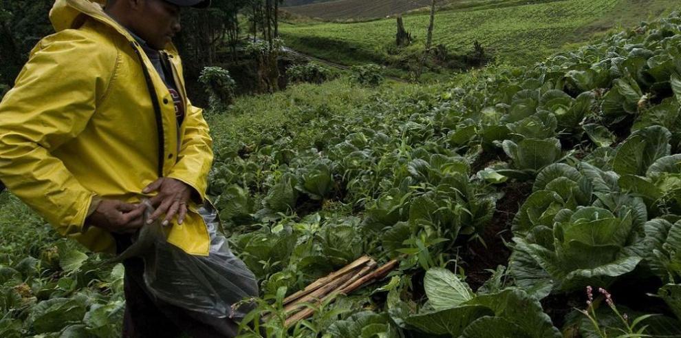 A más agricultura familiar, menos hambre