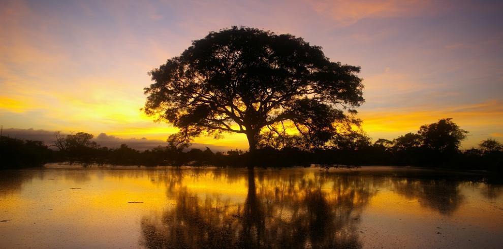 Países amazónicos ratifican el valor