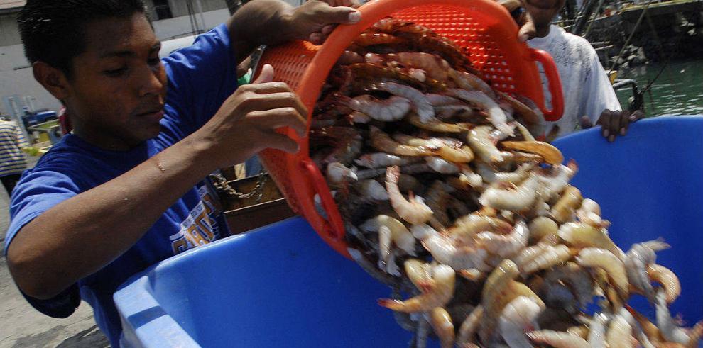La actividad pesquera repuntó 15.2% en el 2013