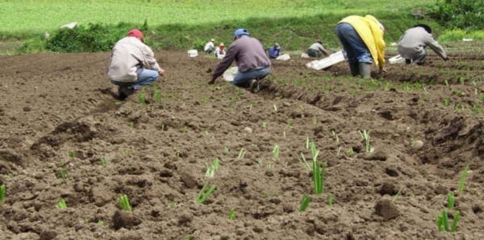 UE apoya la producción agrícola en El Salvador