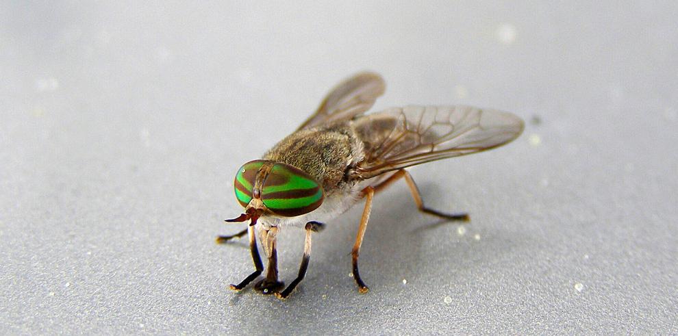 Insectos podrían ayudar a combatir el hambre en el mundo