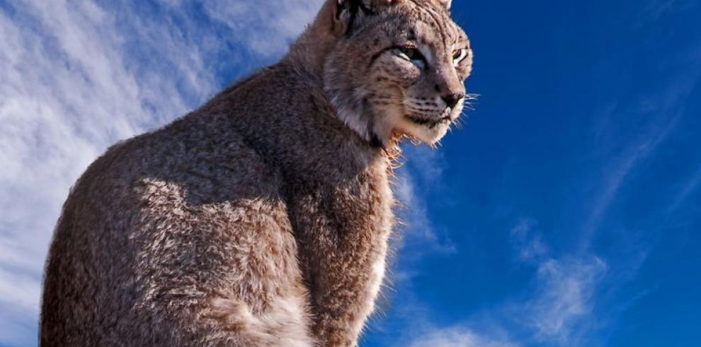 La oportunidad de los animales en extinción