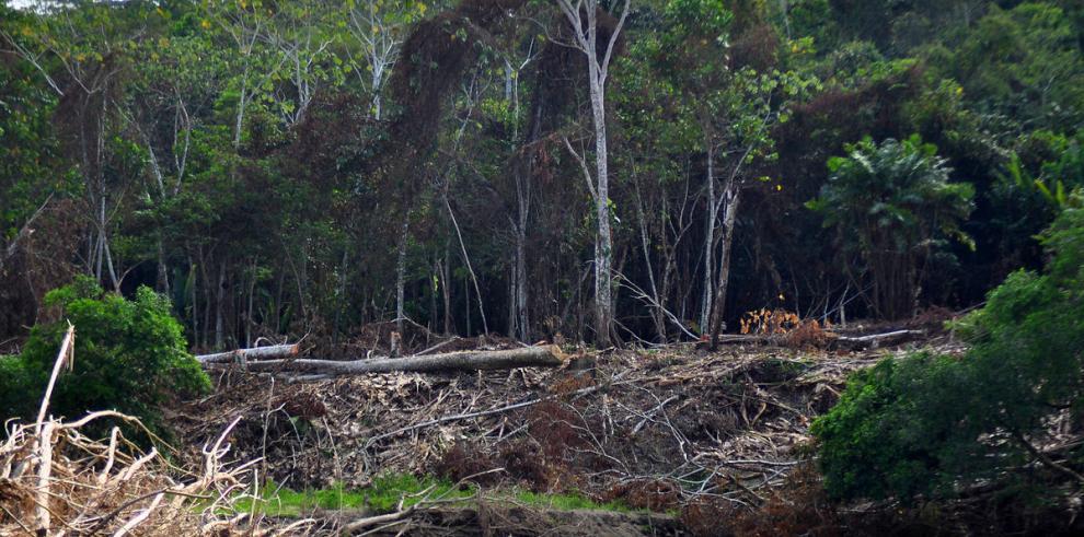 Más del 65% de los bosques de Panamá han sido devastados