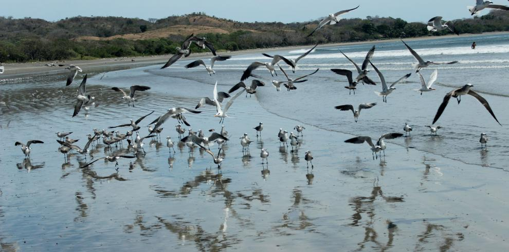 Cambio climático promoverá los virus en aves y humanos