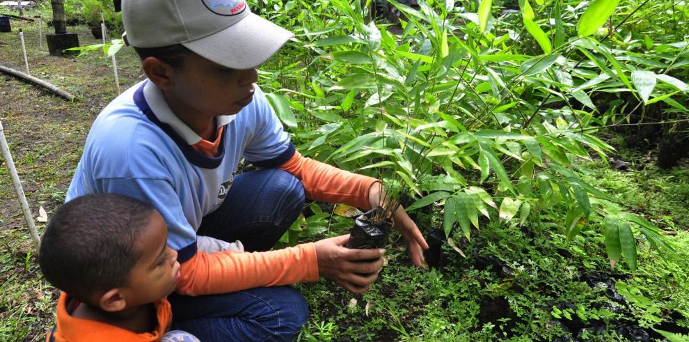 Reforestación en el bosque Palo Seco