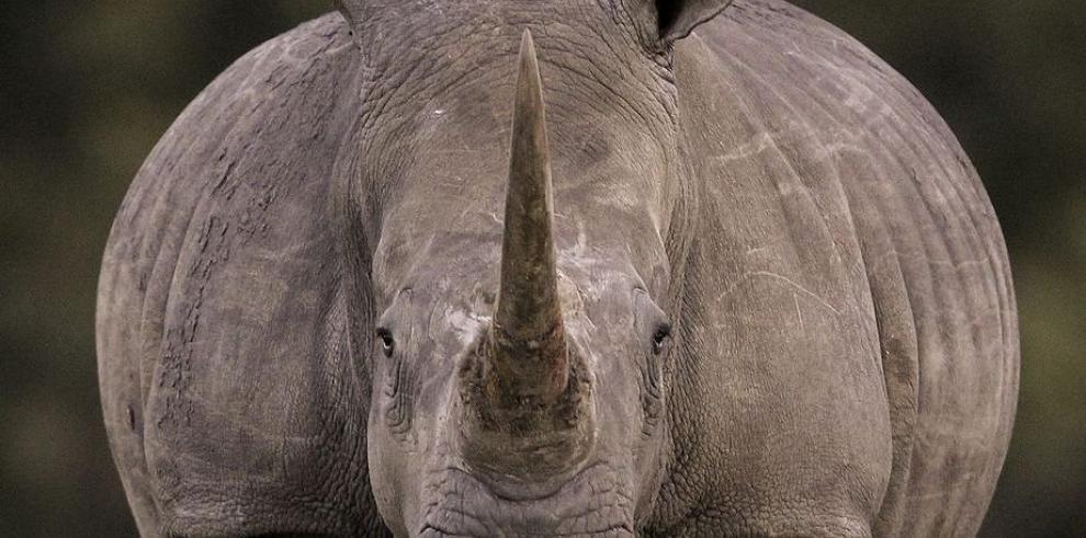 ONU denuncia alta demanda de productos de fauna salvaje
