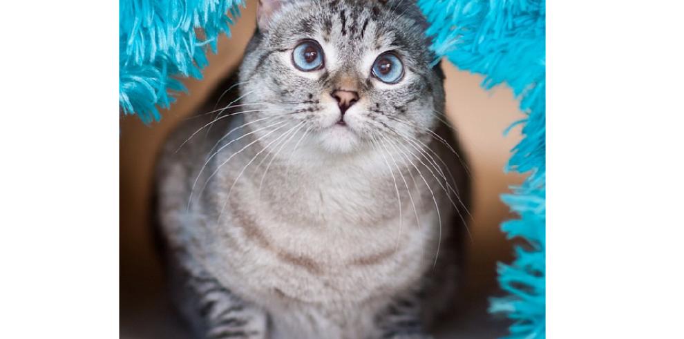 'Nala' la gata más famosa de Instagram
