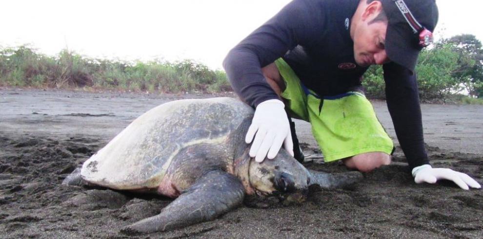 Rescatan tortuga con signos de contaminación
