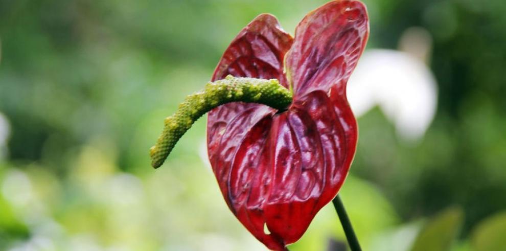 La exuberancia tropical se hace realidad en una flor