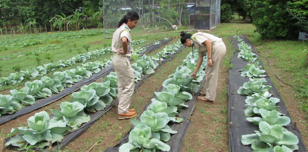 Estudiantes agropecuarios demuestran talento