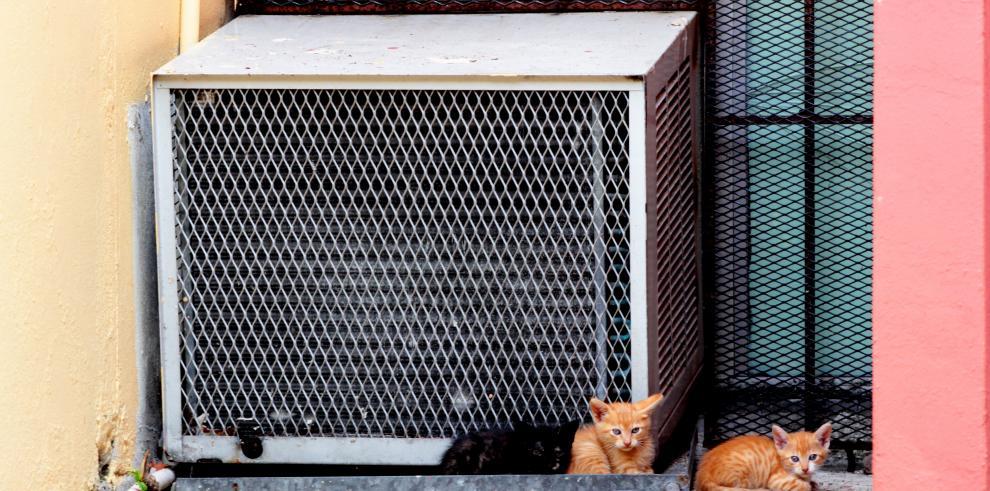 ¿Invisibles? Animales sin hogar, en la ciudad