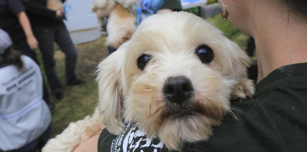 Los perros también pueden sentir celos, según estudio