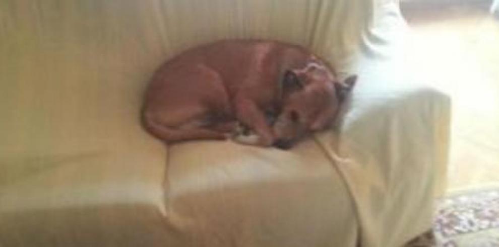 Española que superó ébola lamenta muerte de perro
