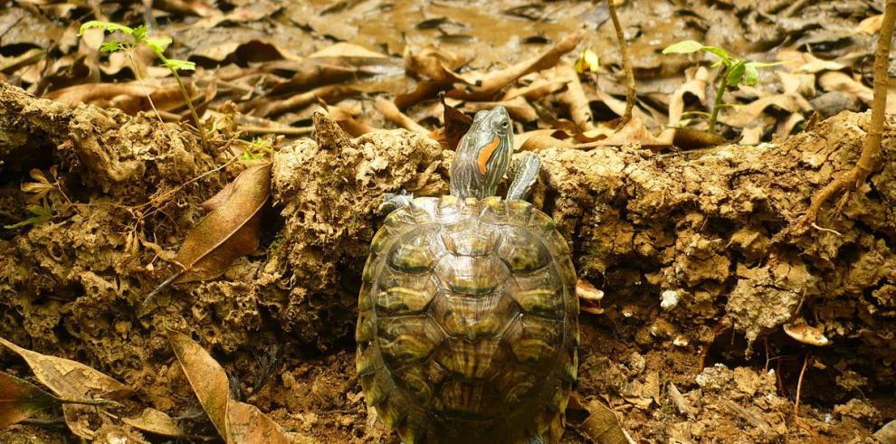 Detectan cien especies invasoras en Aragón
