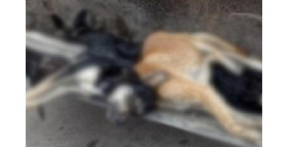 Argentina horrorizada por asesino de masacre de perros