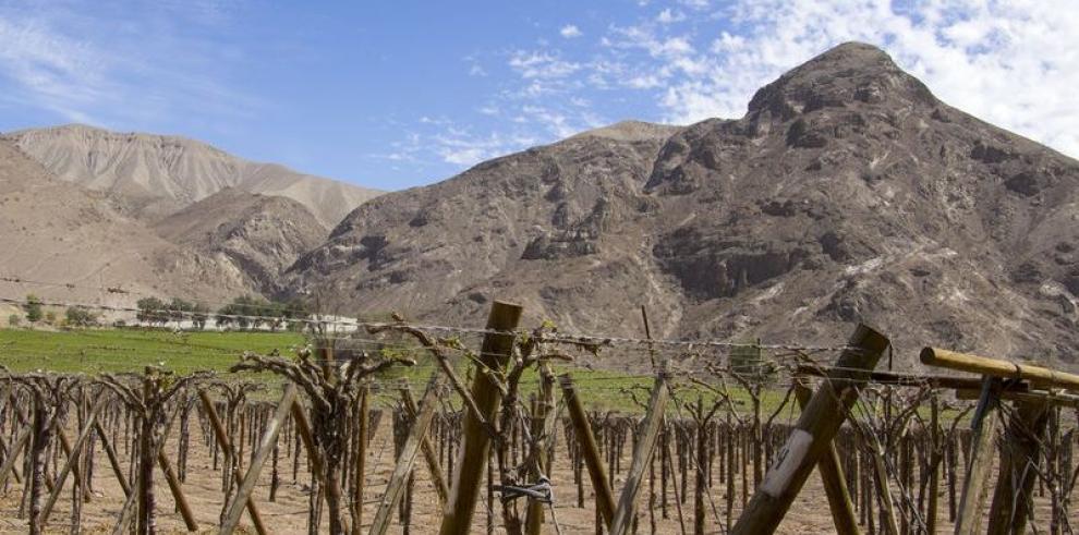 Viñas chilenas abogan por conservación