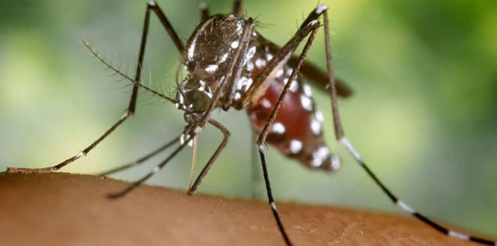 Prueban en humanos vacuna contra el virus de la fiebre Chikungunya