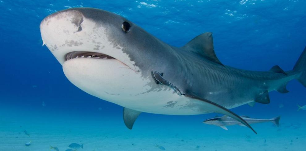 Científicos del mundo, contra la matanza de tiburones