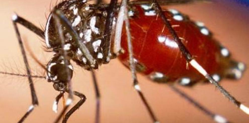 Una vacuna experimental contra el dengue logra una eficacia del 60,8 %