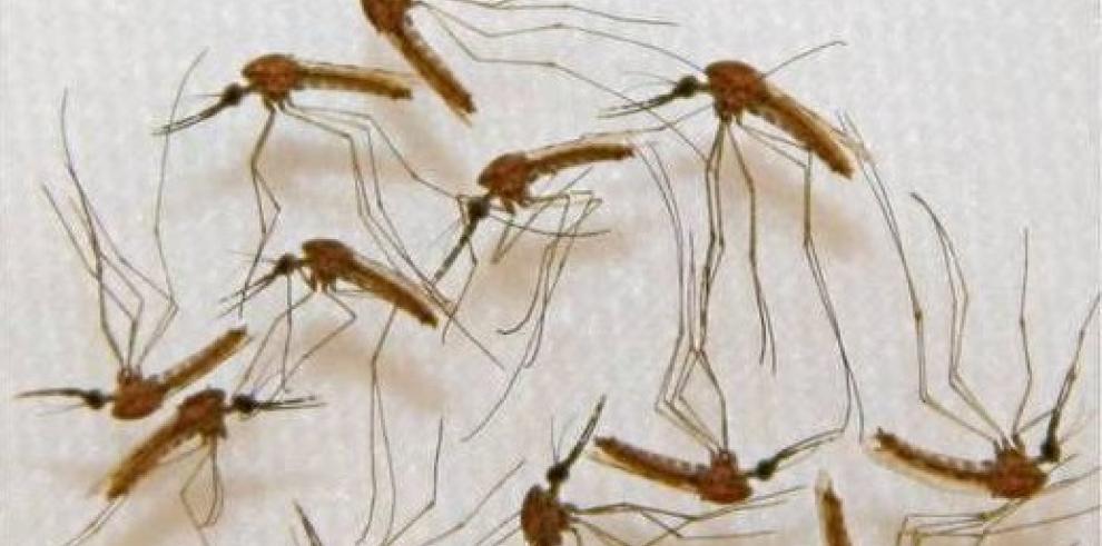 Miembro de brigada cubana contra el ébola en África muere de malaria