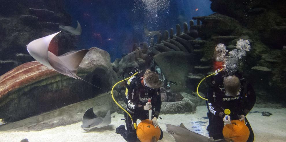 Curiosa competencia de tallar calabazas bajo el agua