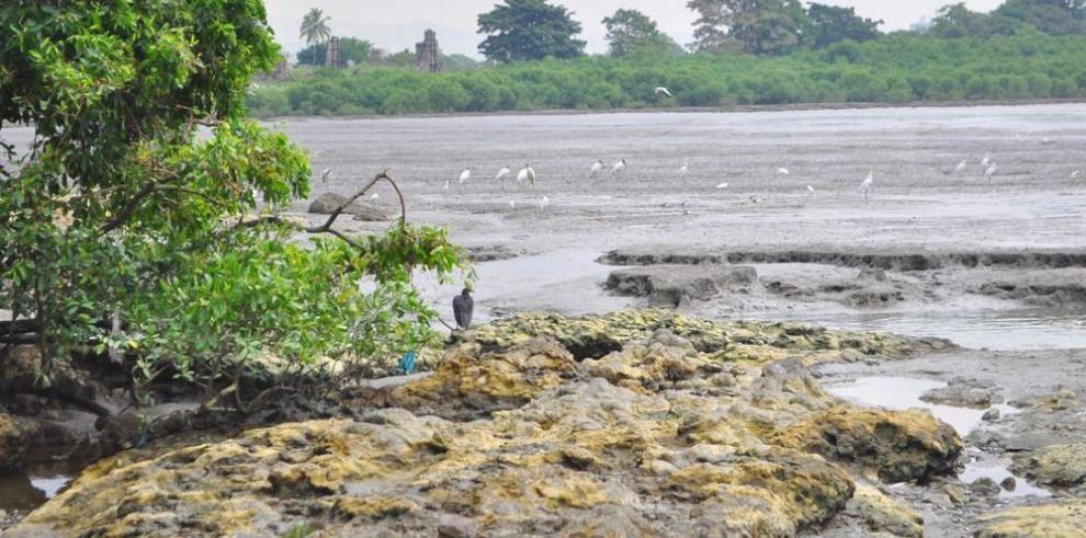 SEO/BirdLife pide implementar medidas ante la pérdida de especies
