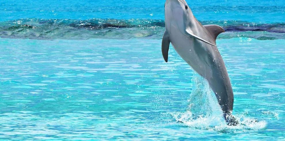 Delfines podrían estar en riesgo de extinción