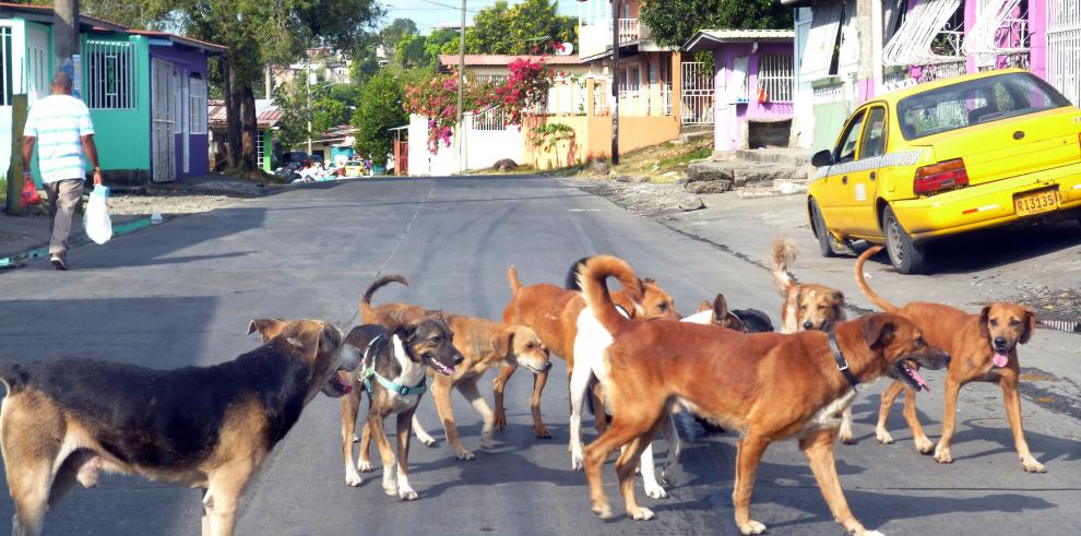 Más de 300.000 perros viven en las calles de Bolivia