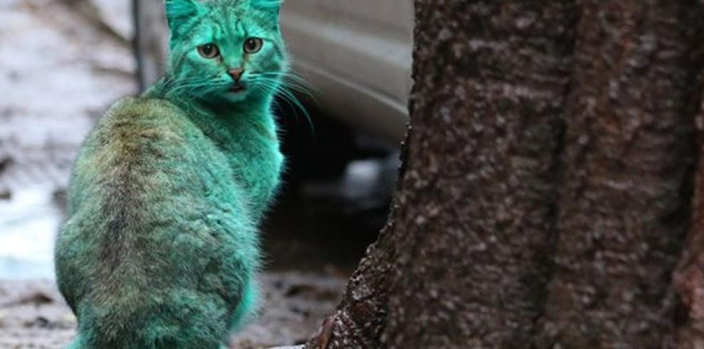 Desvelado el misterio del gato verde de Bulgaria