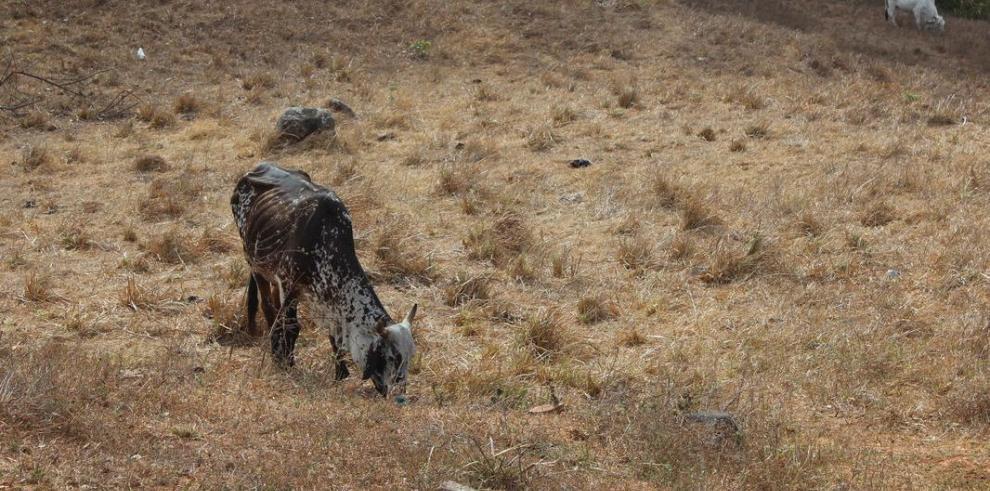 Productores y ganaderos sufren los efectos de la sequía
