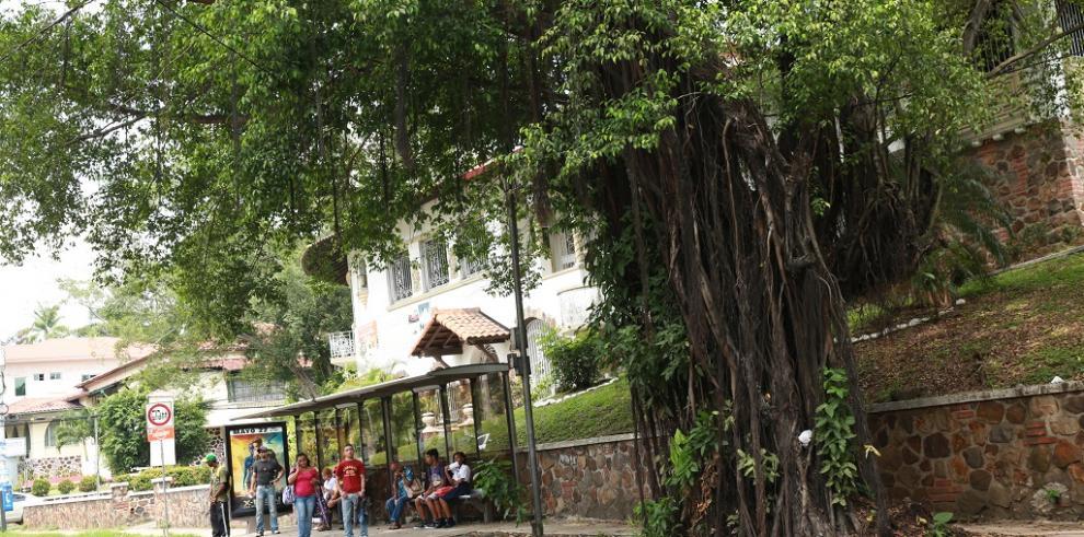 Toman medidas preventivas para evitar caída de árboles