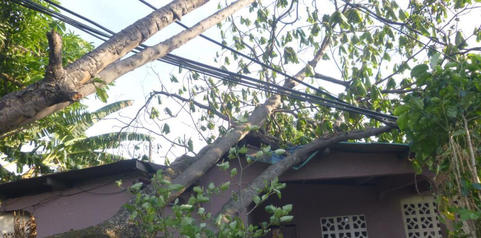 Fuertes vientos provocan caída de árboles