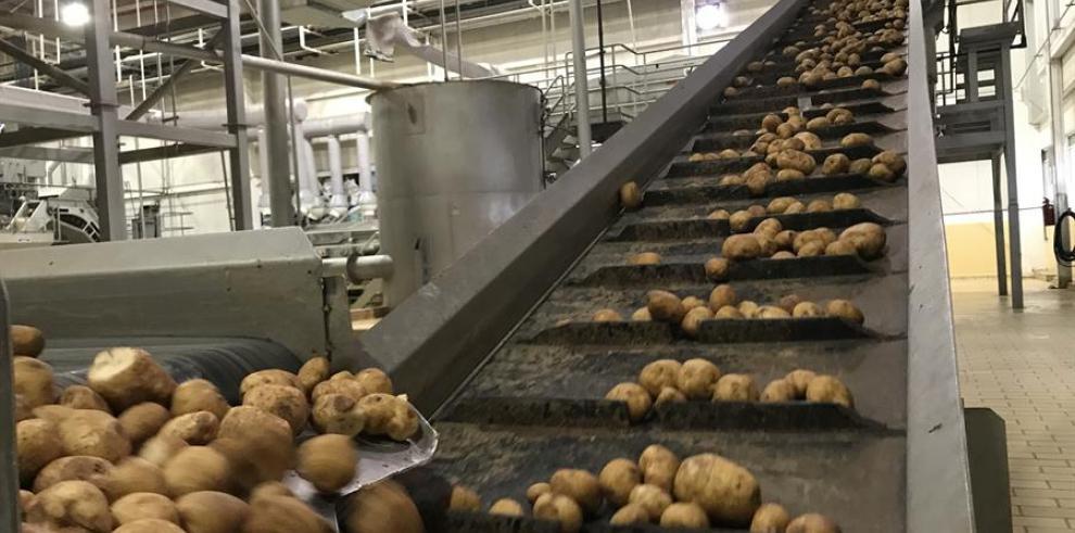 En la imagen, proceso de clasificación de patatas.